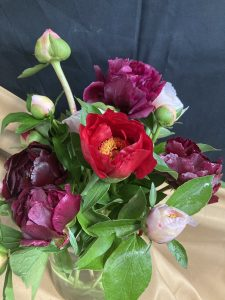 Locally Grown peonies